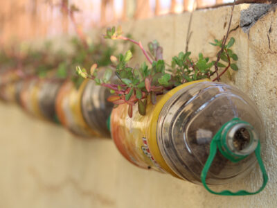 Upcycle/recycled,Water,Bottle,With,Flower,Plant